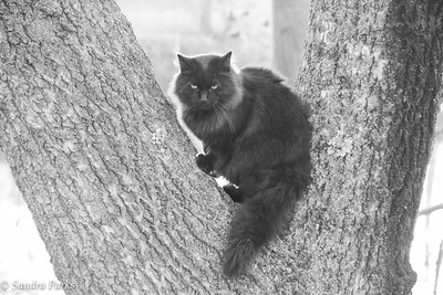 11-19-16: kitty in the park