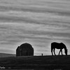12-21-16: horse on a hill