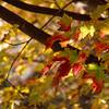 10-29-16: home tree