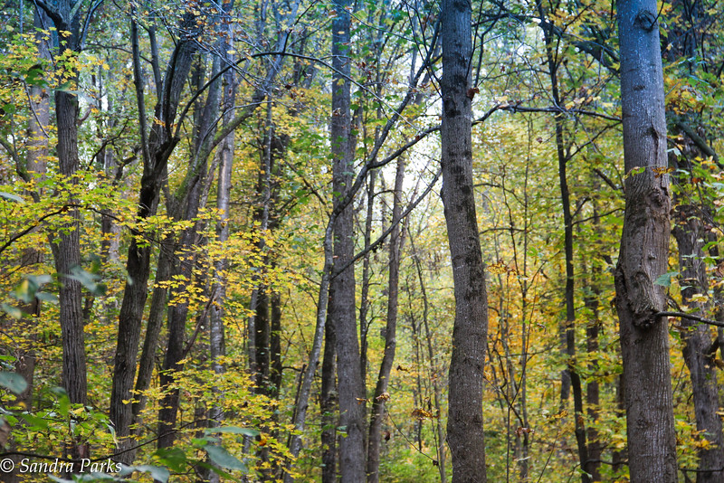 10-21-16 : in the woods