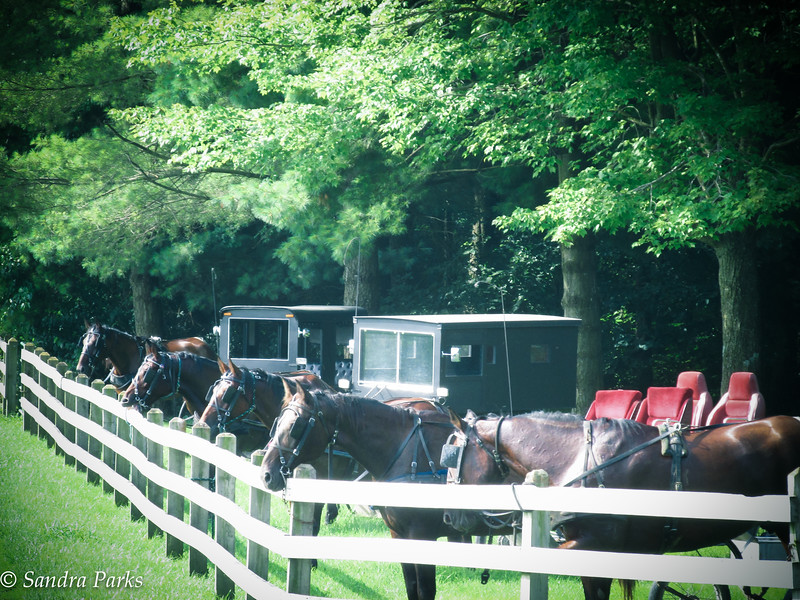 7-26-16: buggies at the schoolhouse