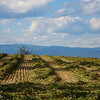 10-16-16: New cut hay, and the Alleghenies