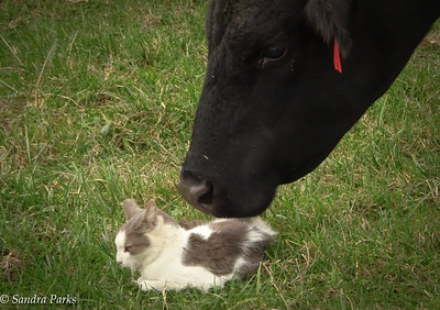 10-5-16 : cat and cow