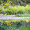 9-25-16:  Spring Creek