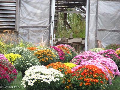 9-20-16: Woderland Nursery