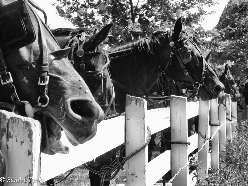 6-12-16: Sunday morning horse scene