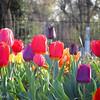 4-13-16: Municipal flowers