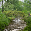 5-22-16: Spring Creek