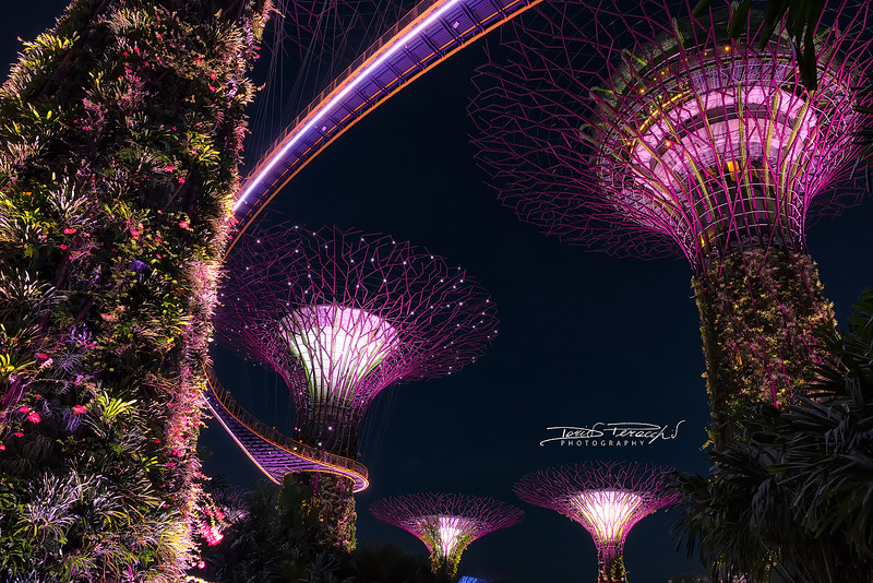 Supertrees Show