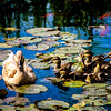 4-28-17: ducklings in the lily pond