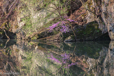 4-16-17: Redbuds on the North River