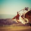 2-21-17: Milkweed, Badger Road