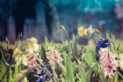 3-24-17: Muncipal flowers