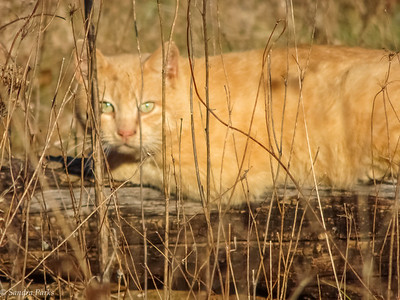 3-22-17: Cat on a log, Wise Hollow