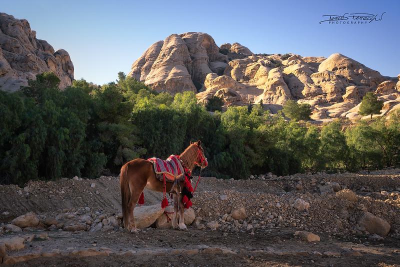 Cavallo Per Il Siq