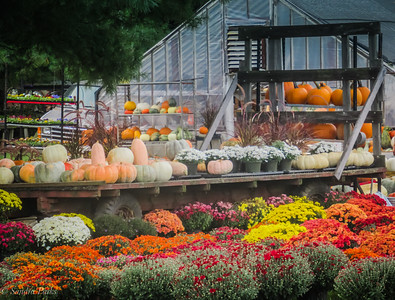 10-5-18 : Mums and pumpkins, signs of fall.