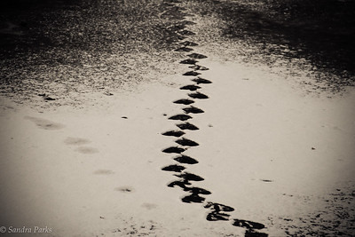 1-3-17:tracks