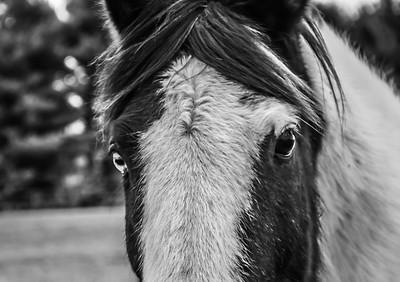2-12-18: Bridgeater horse