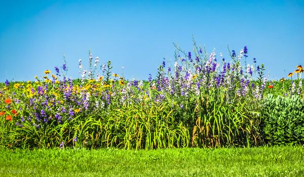 6-19-18: Roadside garden