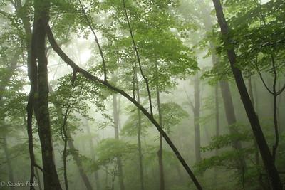 6-22-18: in a cloud on SHenandoah Mountain
