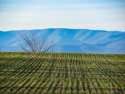 2-12-18: Green fields and Alleghenies