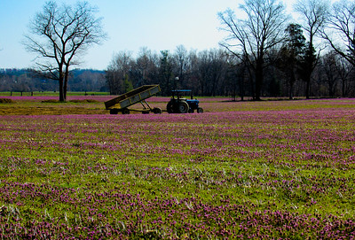 4-14-18: Fields of red clover