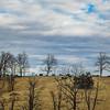 1-12-18: Cows and sky, Ridge Road