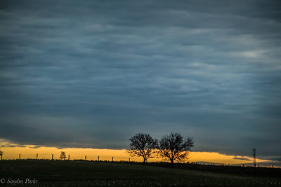 11-8-18: Two trees, and a power line, at sunup.