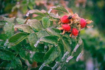 11-15-18: Ice day.
