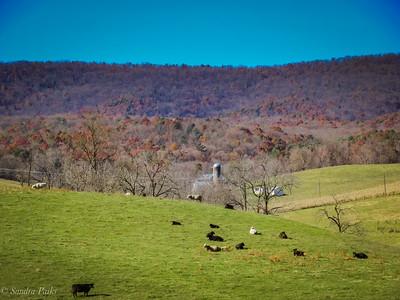 11-11-18: Daniel Cupp Road