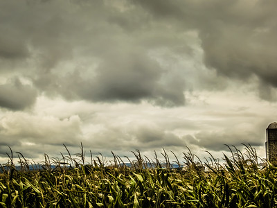 9-14-18: Corn and clouds
