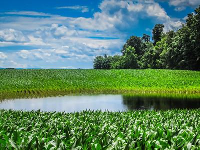6-23-18: flooded corn field