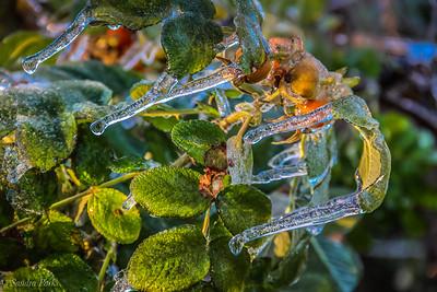 11-16-18: Ice storm