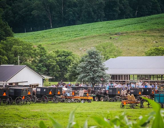 6-20-18: Mennonite auction