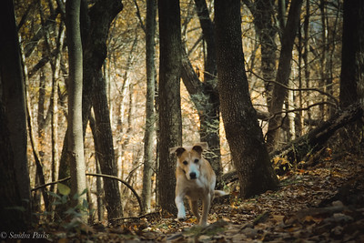11-10-18: Max in the woods