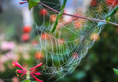 10-08-18 : Spider web in the flowers, East Bank Street
