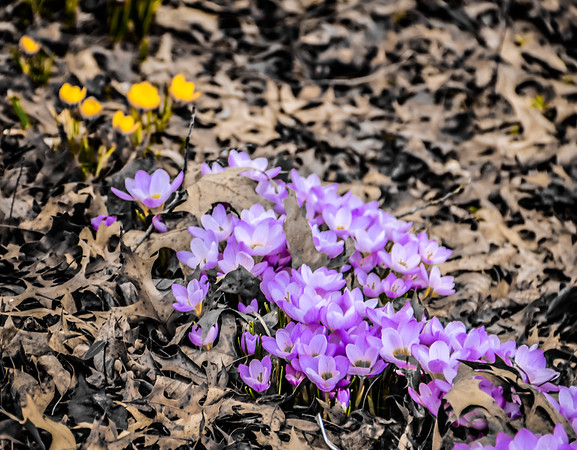 2-15-18:: February flowers