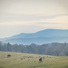 2-24-18: mountains and cows