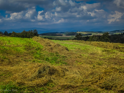 10-08-18 : Fresh mown hay, Ridge Road
