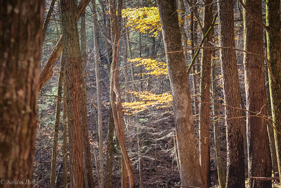 11-10-18: in the woods