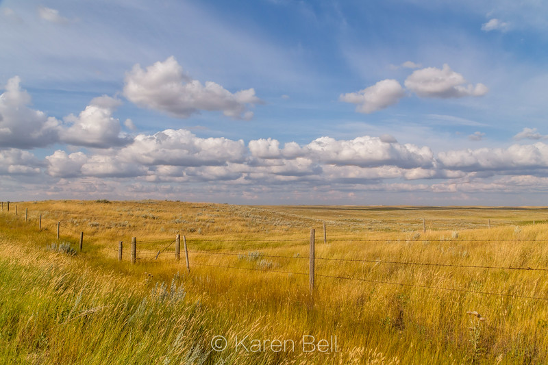 Fields of Gold, Manitoba, Canada