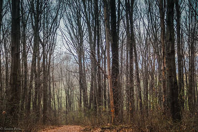 2-26-19 : A walk in the woods