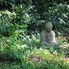 7-24-19 : Buddha in my practice garden
