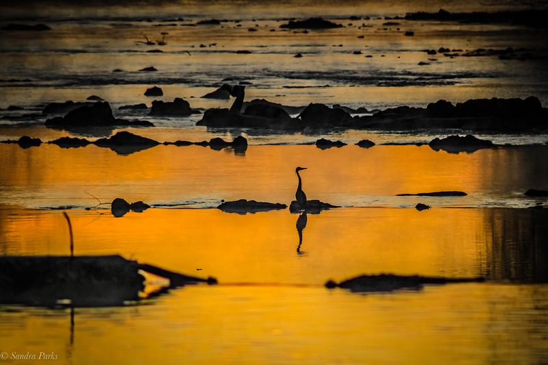 12-12-19: Heron at dawn