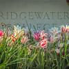 4-23-19: Bridgewater College