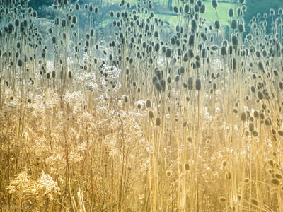 12-8-19: The fields of winter