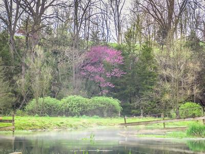 4-14-19: Spring Creek