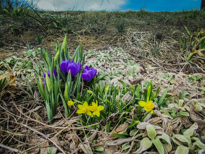 3-13-19: Roadside flowers, Fadley Road.