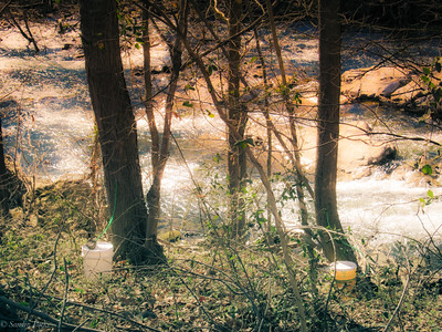 2-16-19: Sugaring time, Dry River.