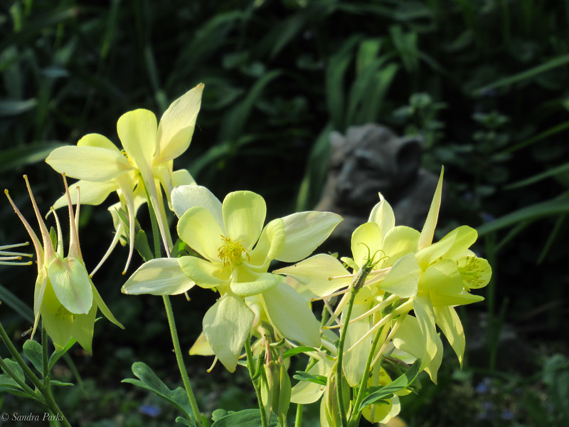 4-30-19: Home gnome and columbines